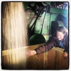 Threshing dry beans